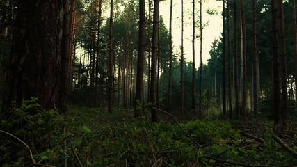deutscher Wald - slide den Baum empor - Nadelwald