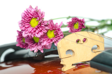Violin and purple daisy on white background