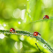 grass and dew drops and ladybirds