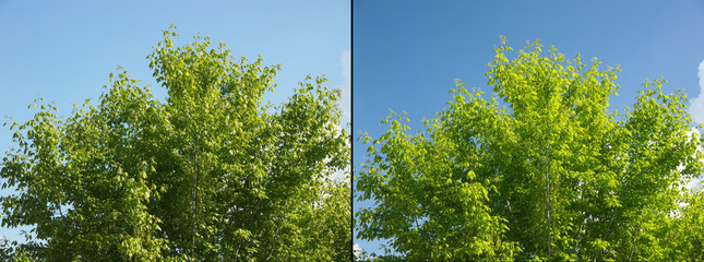 Polarising filter