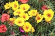giardinaggio fioritura primaverile