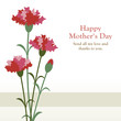 Carnations for mother