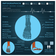 Foot Bone Infographic Infocharts Health And Medical