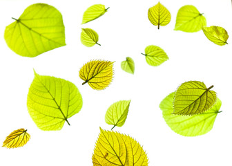 arrangement of layers of fresh green spring leaves