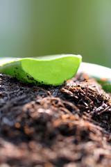 close up surface of aloe vera on ground.
