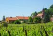 Vignoble d'Orschwiller , Alsace.