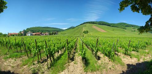 Panorama sur le vignoble d'Orschwiller et kintzheim