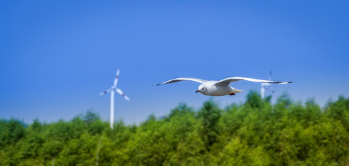 A flying seagull hovers over mangrove forest