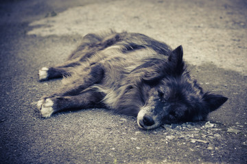 Alone old dog