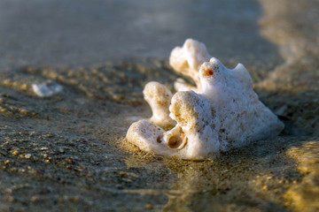 a white coral and sand on the beach