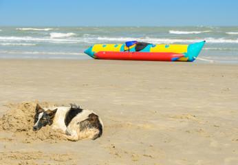 Dog sleeping on beach sand