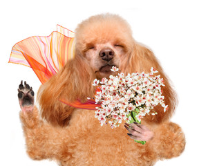 Dog smelling flowers.