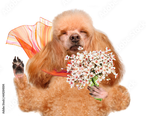 canvas print picture Dog smelling flowers.