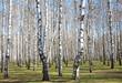 First spring greens in april birch grove