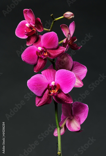 Sticker pink orchid on black