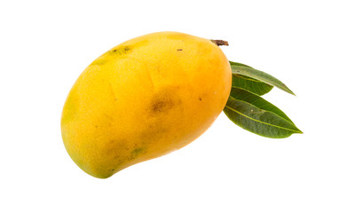 Yellow bright mango