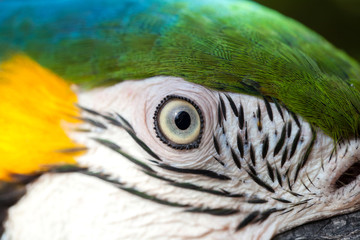 close-up of eye macaw