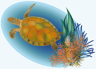 Marine life with turtle, vector illustration