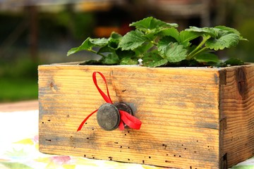 alte schublade mit erdbeeren V