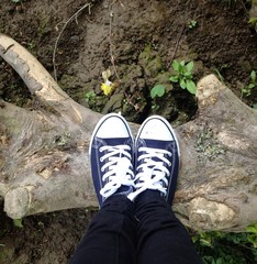 standing on driftwood
