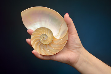 Nautilus shell section in hand isolated on black background