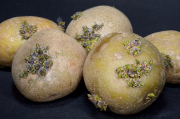 old potatoes, sprouts