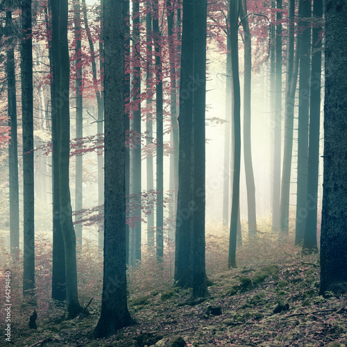 Mysterious forest - 64294840