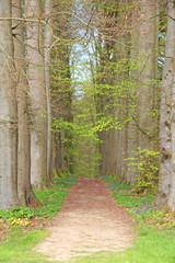 Tree alley  footpath