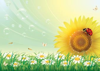 Цветочный луг с ромашками и подсолнечника