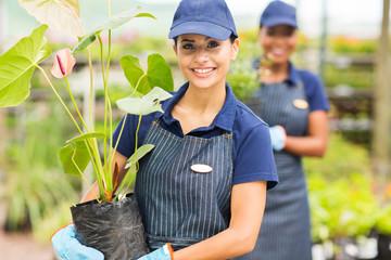 young female gardener working in nursery