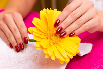 Beautiful hands on a yellow flower at the beautician.