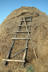Rakes and stairs to the haystack