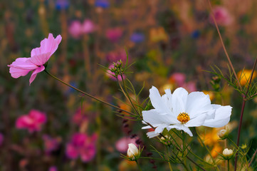 Beautiful wildflowers blooming at spring time