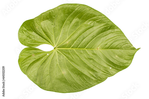Deurstickers Palm boom jungle leaf white background