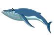 Big blue baleen whale