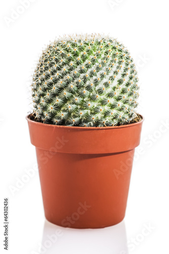 Staande foto Cactus Cactus isolated on white background