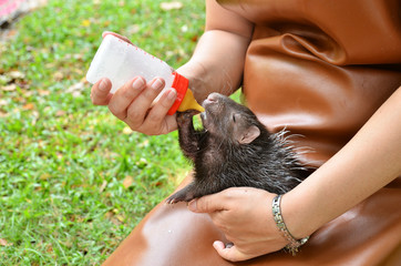 zookeeper feeding baby porcupine