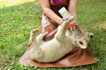 zookeeper feeding baby lion
