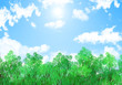 森と空の背景・夏空