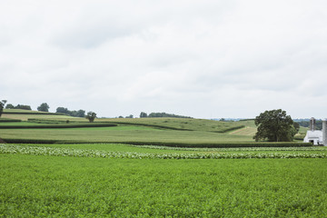 Farm with vegetable crops