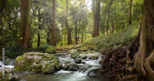 forest waterfall - 64308418