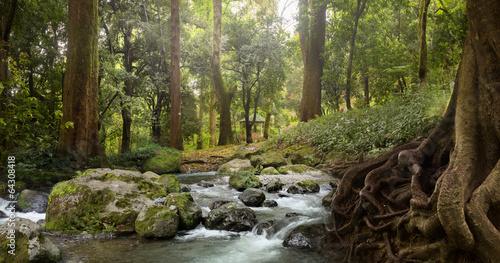 Staande foto Bossen forest waterfall
