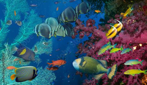 fototapeta na ścianę Koral i ryby