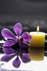 still life with macro of orchid and candle on black stones