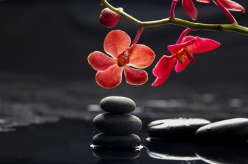 Still life with branch red orchid with therapy stones