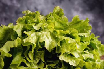 Roman salad lettuce green leaves
