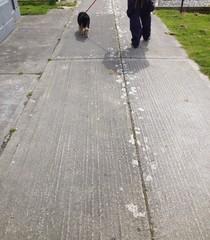 man walking dog on pavement