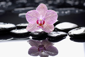 Pink orchid with stones on wet background