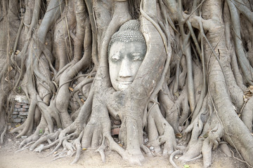 Buddha head entwined in tree roots Ayutthaya Thailand