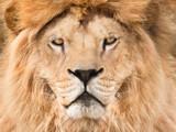 Majestiic King